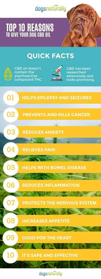 image of cbd for dogs graphic